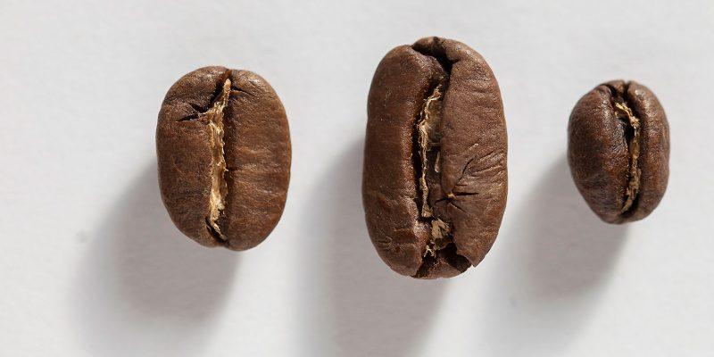 kaffeebohnen sorten varietäten